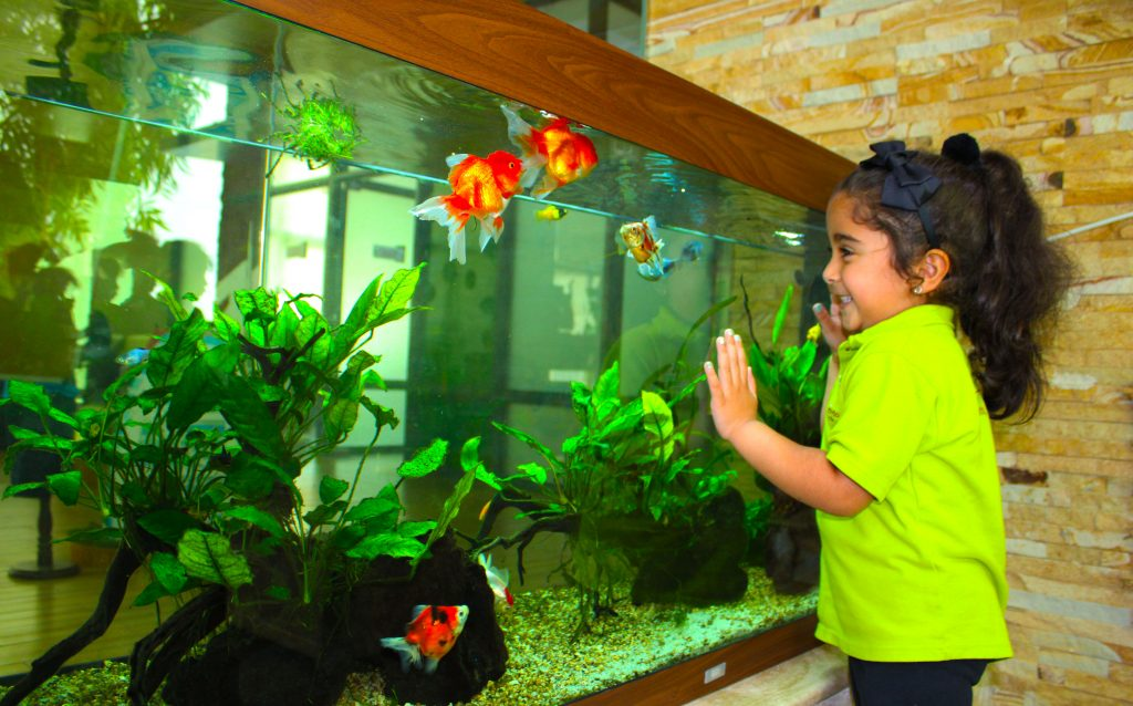 Photograph of a young girl learning about Starfish and Fish in the aquarium situated with the Discovery and Nature Room of the Future International Nursery Dubai in Al Warqa