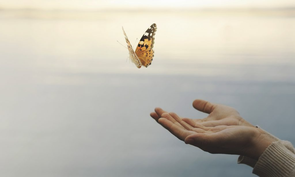 ein Bild, das die fünfte Stufe der Verwerfung darstellt und einen frei fliegenden Schmetterling zeigt