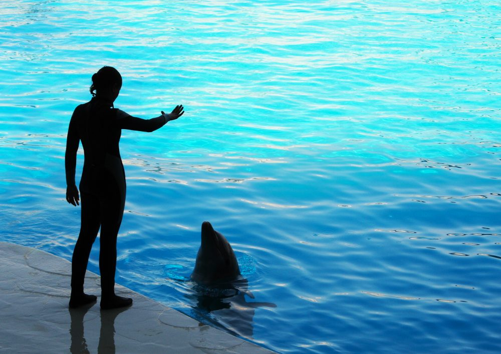 Applying for University. Photograph of a Dolphin Trainer, one of the many carers considered by Danae Giannarou as she worked through her options applying for university on graduating from Dubai College in Summer 2021e