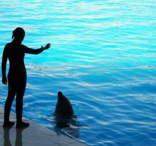 Bewerbung für die Universität. Foto eines Delfintrainers, einer der vielen Betreuer, die Danae Giannarou in Betracht gezogen hat, als sie ihre Möglichkeiten durchgearbeitet hat, sich nach ihrem Abschluss am Dubai College im Sommer 2021e für eine Universität zu bewerben